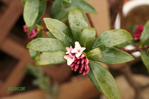 花音+++花と緑を五感で楽しむ教室<熊谷・深谷>
