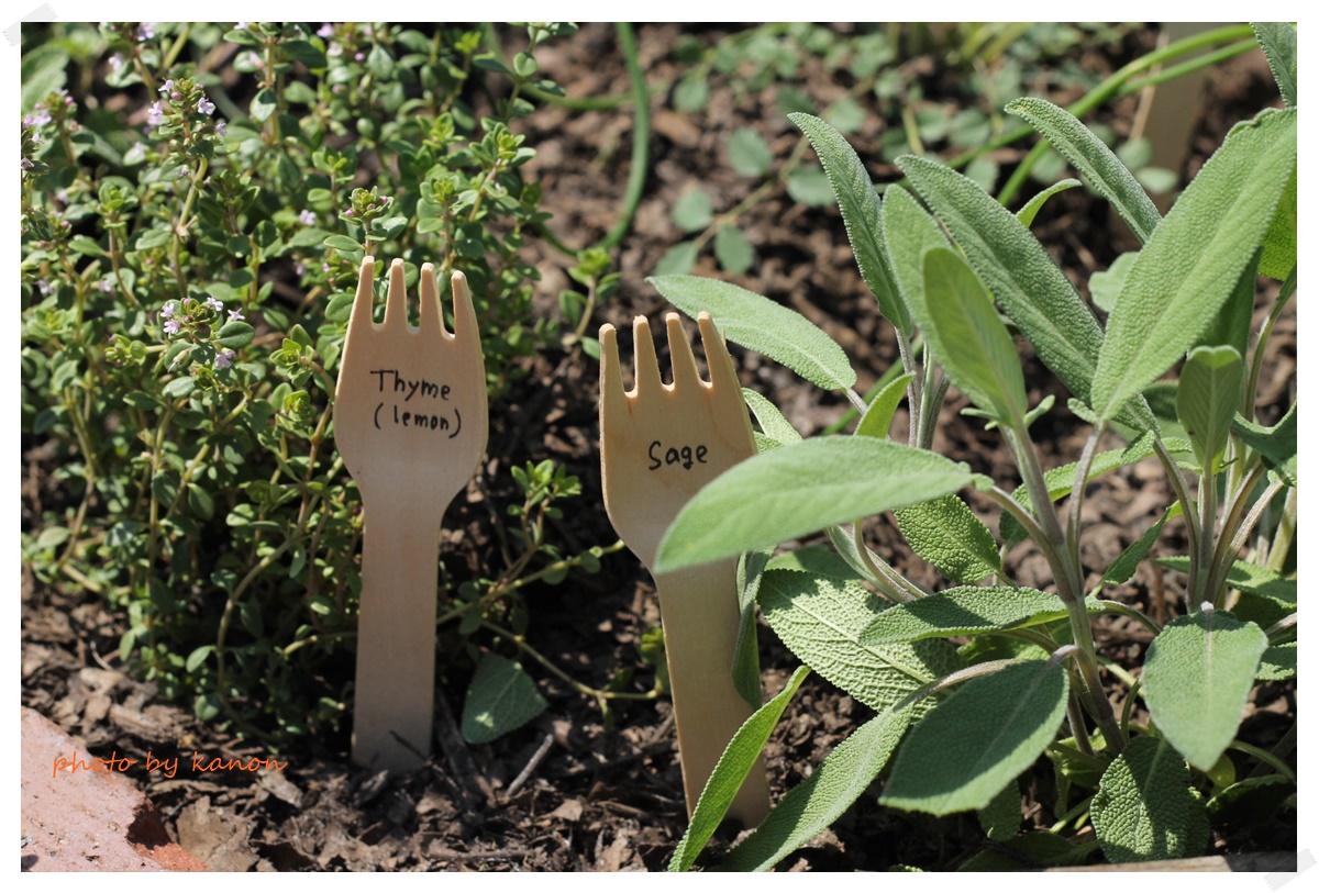 ハーブは生活の中で役に立ってこそ!の植物です^^