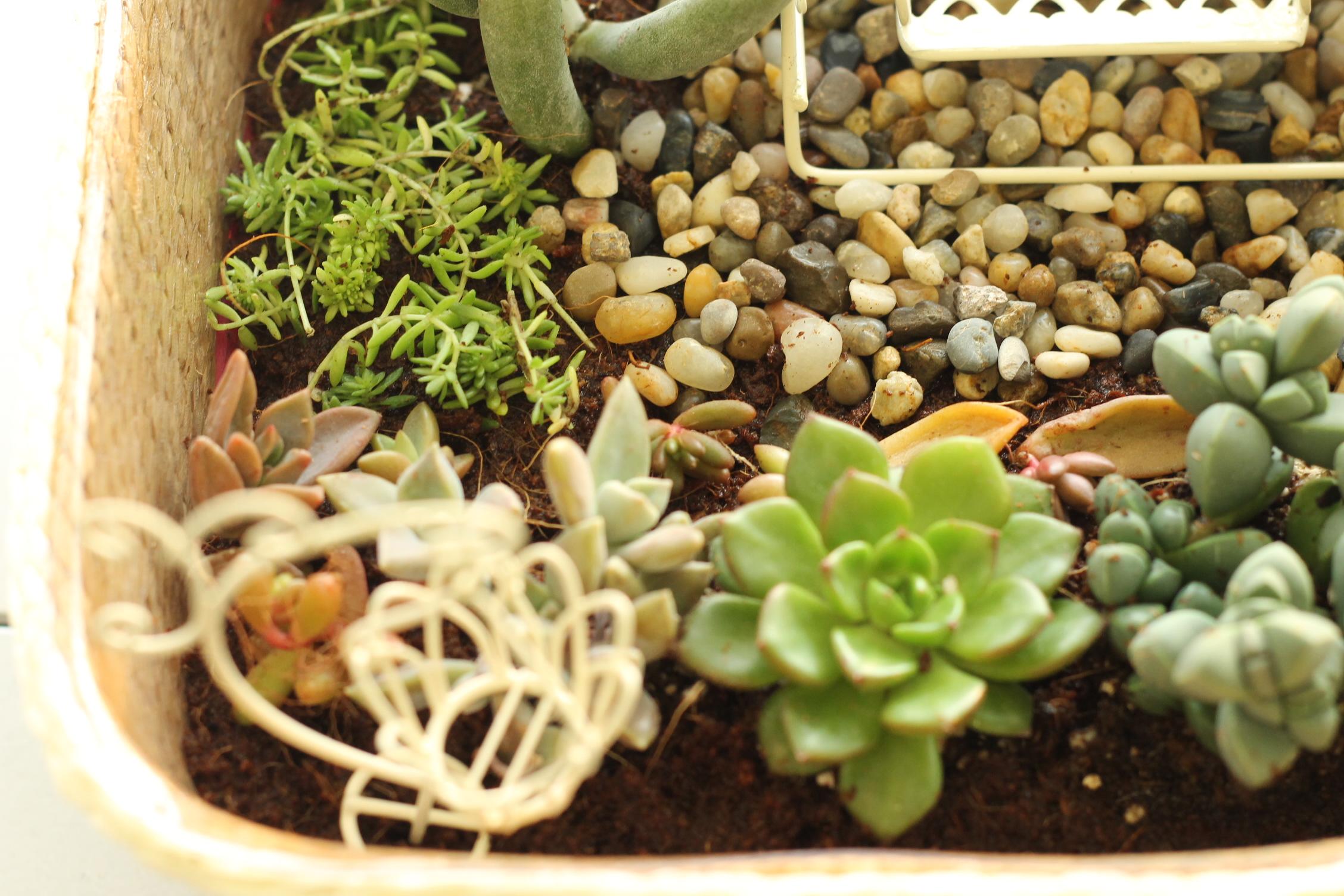 多肉植物のテラリウムを作ろう!単発園芸教室@熊谷市・さいたま市浦和