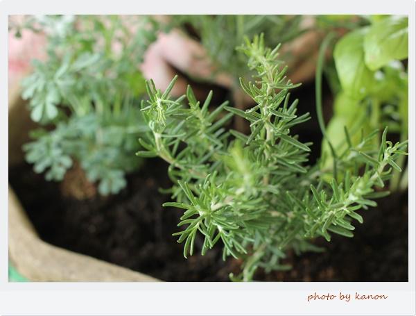 植物を育てる疑問や不安は解消しましょう!埼玉群馬ガーデニングレッスン