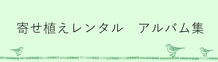 寄せ植えレンタルアルバム【2017spring】