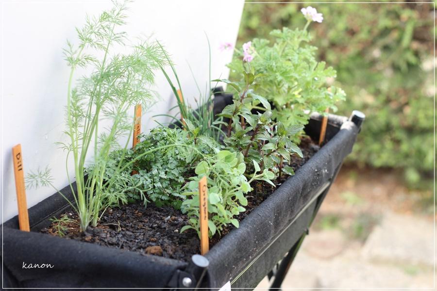 自分の庭で植物を育てる時に、化学肥料や農薬をあまり使いたくないな…と思っている方へ