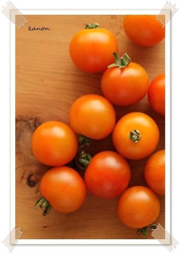 ガーデニングレッスンベーシックコース・ミニトマトを育てる方法@熊谷