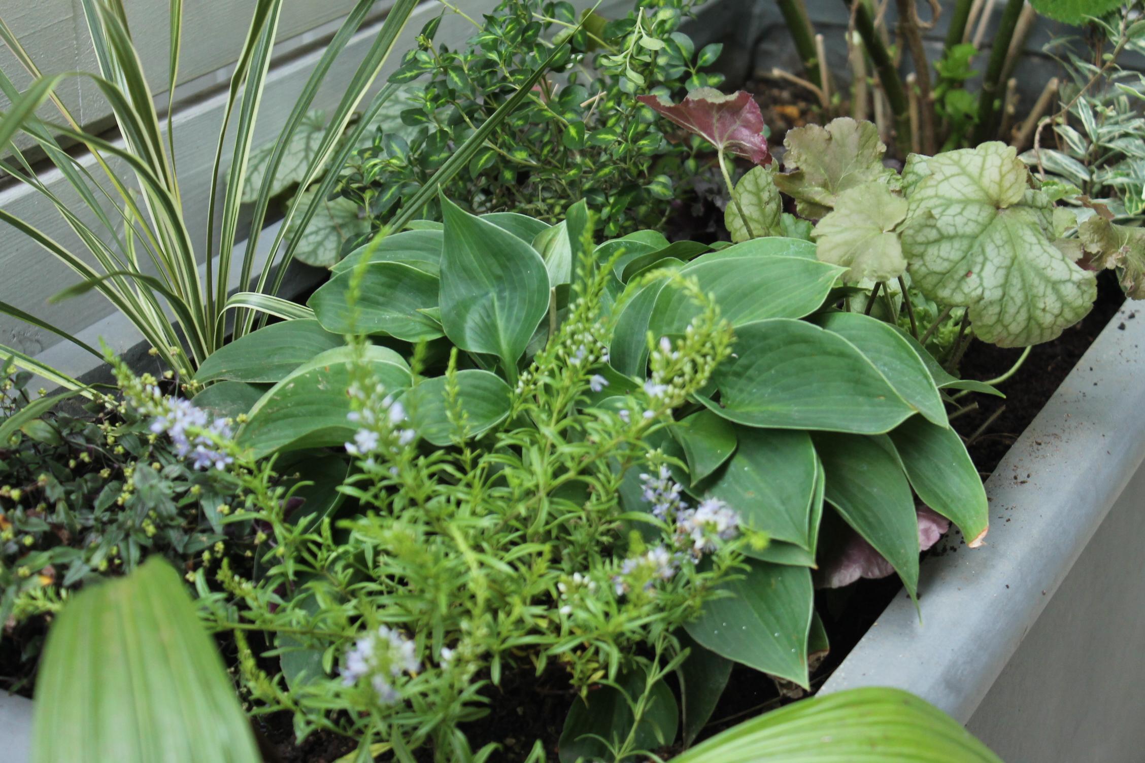 【計画は夏施工は秋に♪】花壇リフォーム・お庭づくり@熊谷市