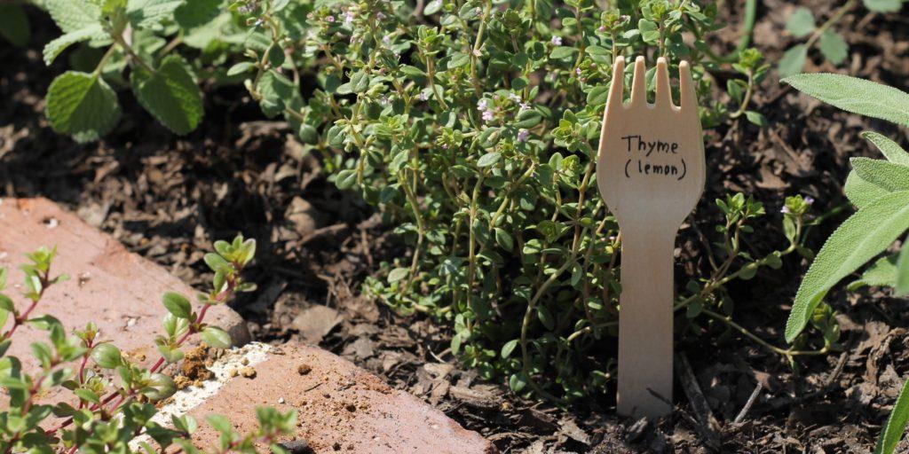 熊谷市植栽下草得意管理ガーデニング教室