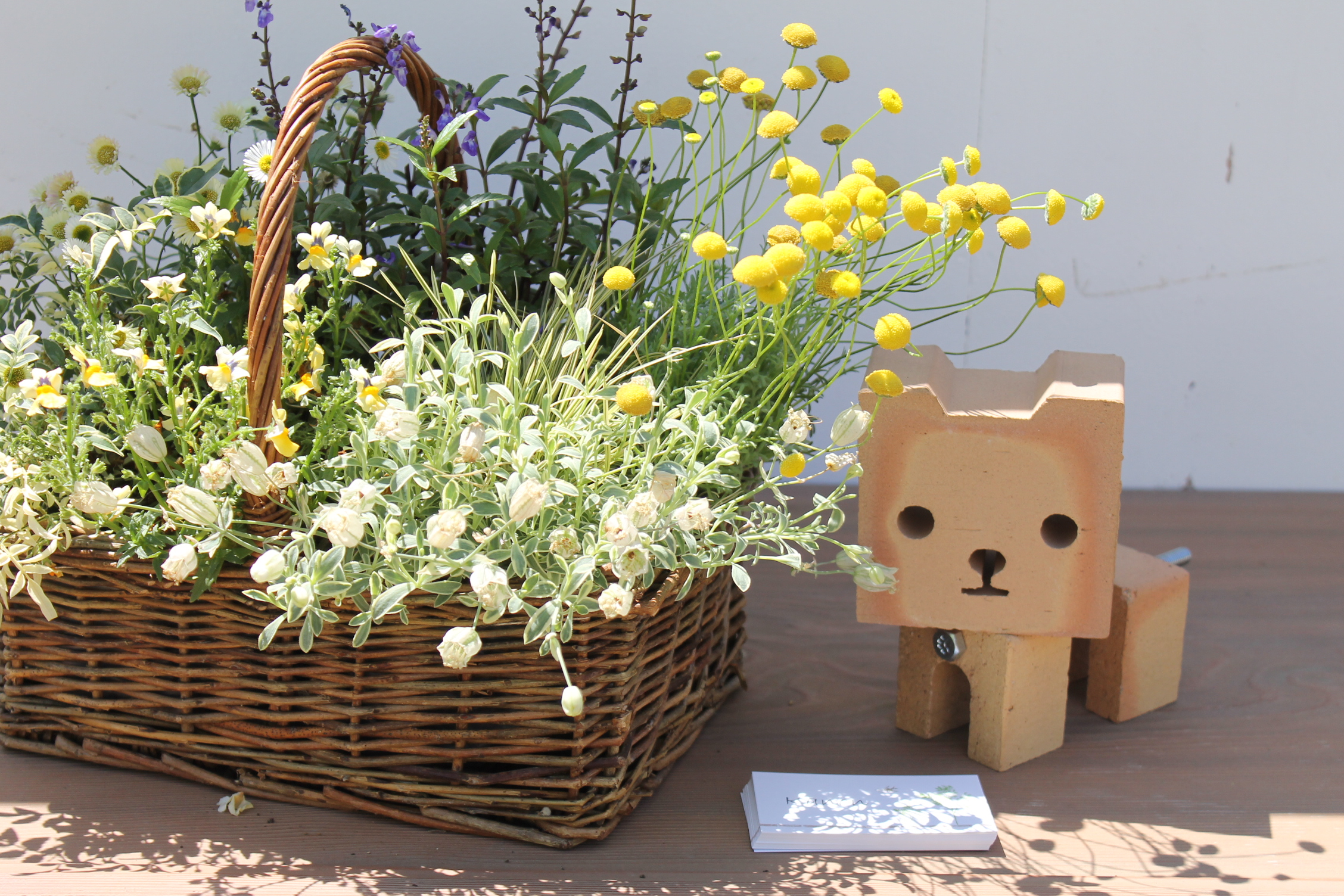【追記あり】9月の1DAYレッスンは、秋の植物を使ってた寄せ植えを作ります!