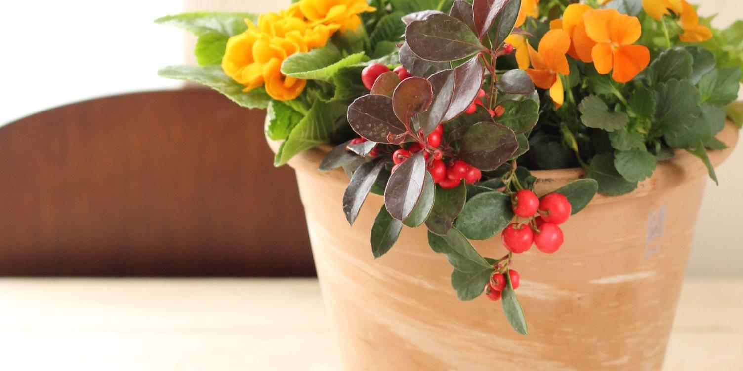 カフェやお店のインテリアに植物を置きたい!という方へ