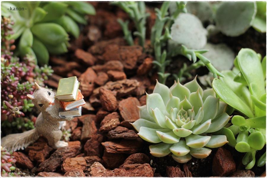 ガーデニングレッスンは園芸初心者さん対象です