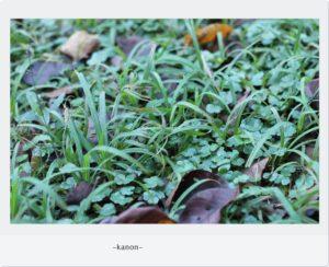 お庭づくり熊谷市草刈が楽しいガーデニング