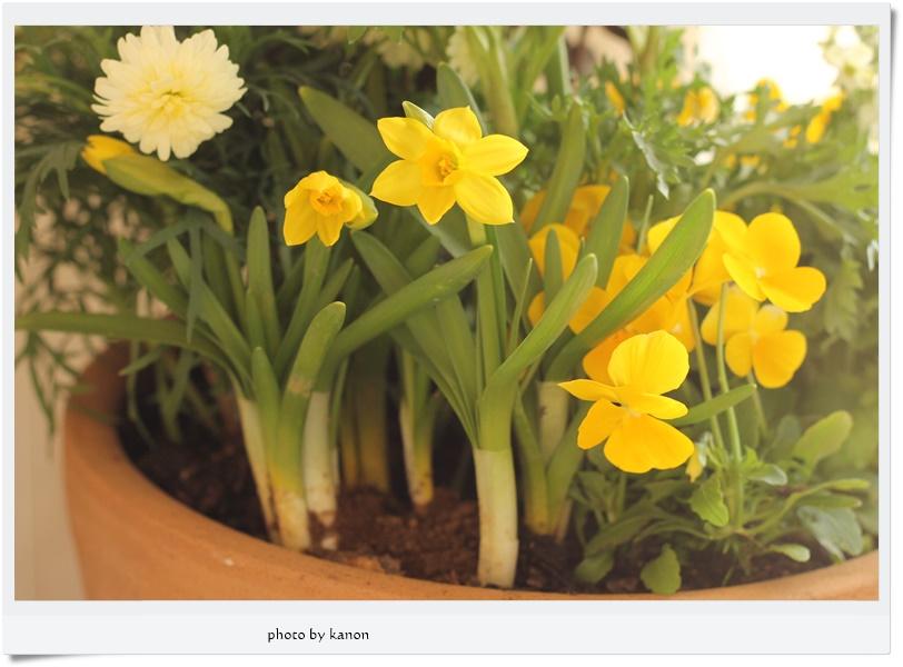 楽して植物を楽しみたい方必見!寄せ植えレンタルサービス