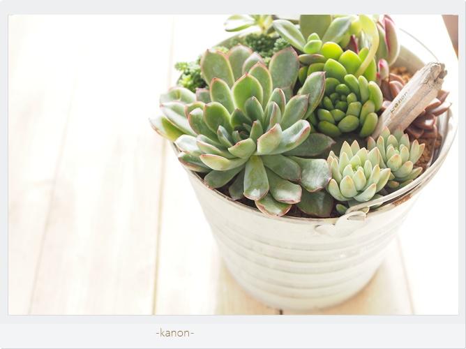 よくある質問「植物初心者なので、ついていけるか心配です」