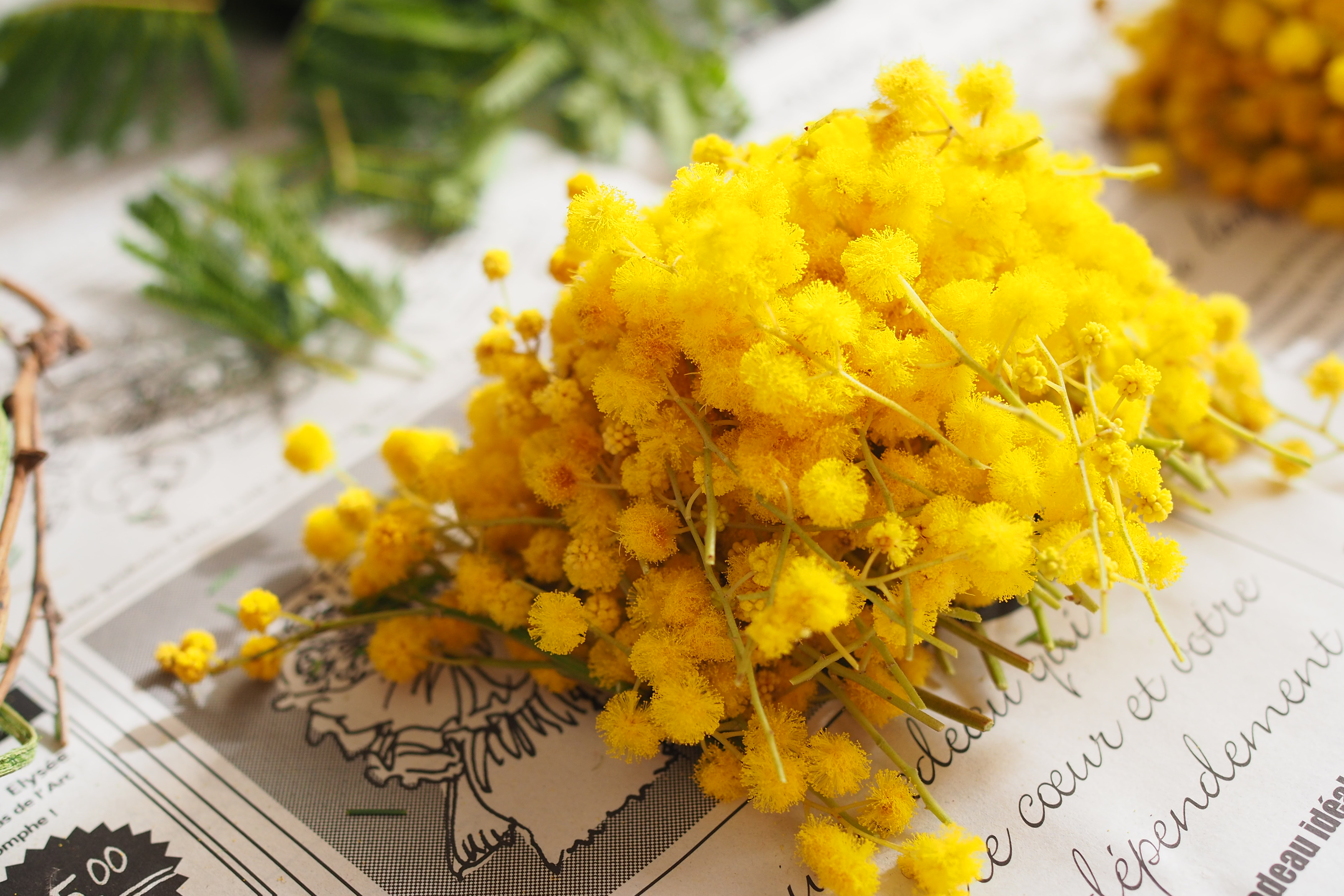 【GardenStory記事掲載】可愛さ&華やかさ満点のミモザをおしゃれに飾ろう