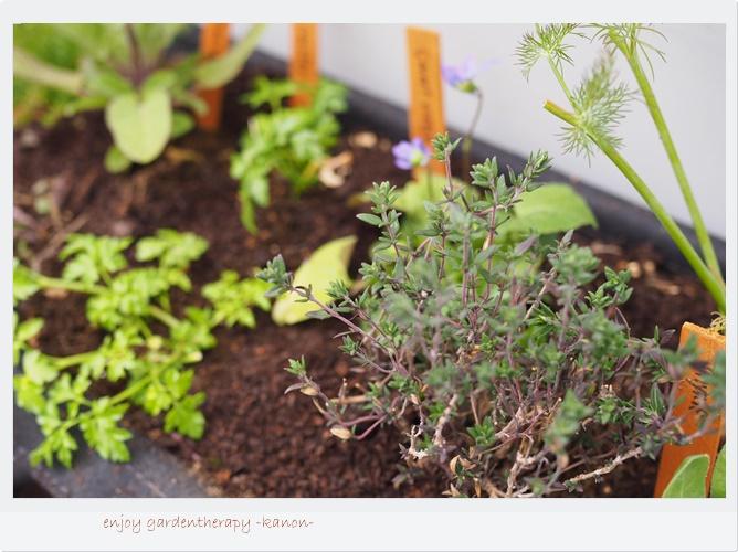 あげる水の量はどれくらい?時間帯は?植物が元気に育つ水やりのコツ