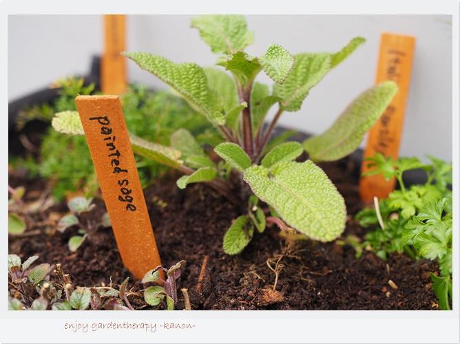 植物で健康寿命を延ばす「ガーデンセラピー」とは?