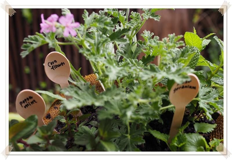 バジルの種まきとハーブブーケ作り|ハーブ活用レッスンレポ熊谷市籠原