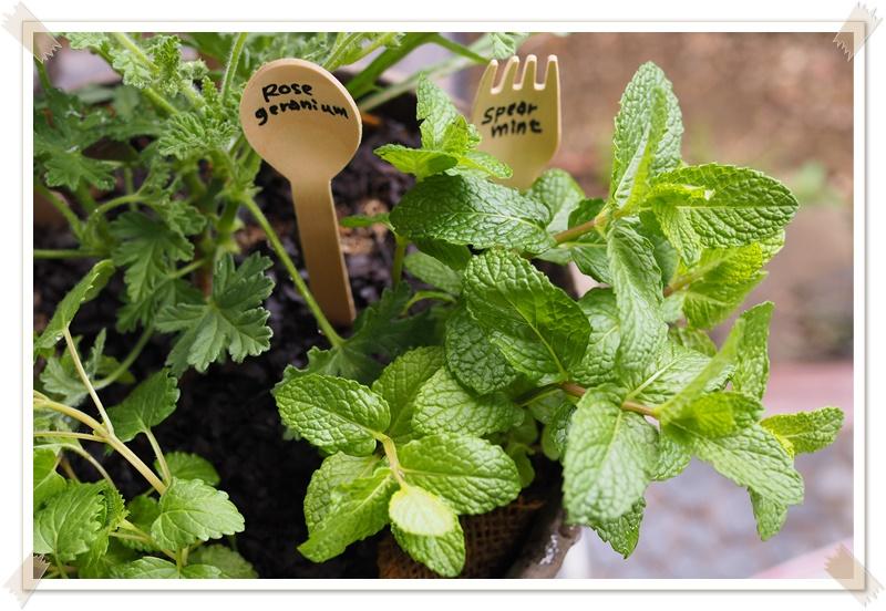 成長した姿を思い浮かべて…寄せ植えを上手く作るポイント