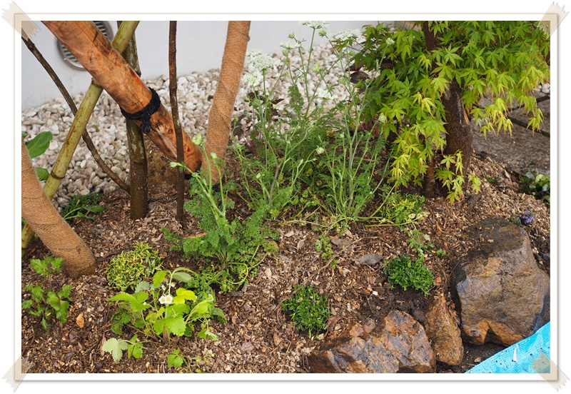 自分の庭で植物を育てる時に、化学肥料や農薬をあまり使いたくない方へ
