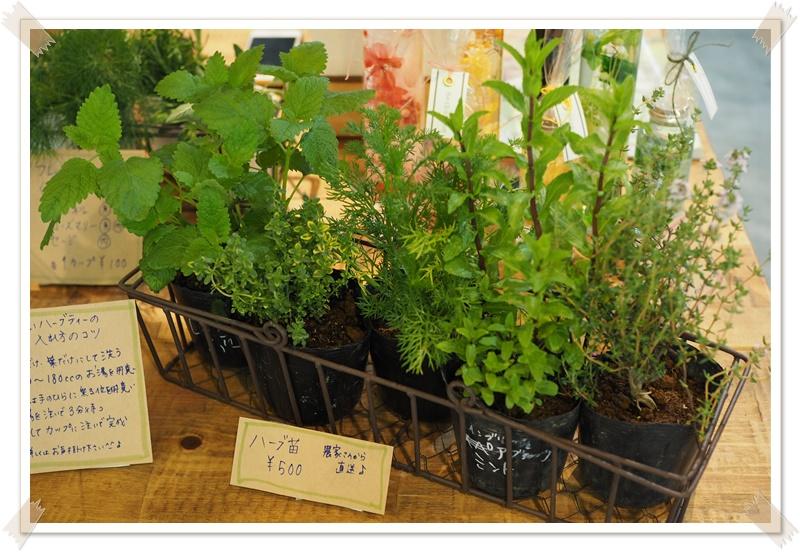 ゴールデンウィークは植物を植えよう♪ガーデニングを楽しむ2つのコツ