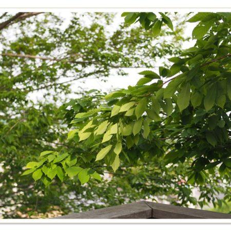 庭作り剪定メンテナンス施工例熊谷市