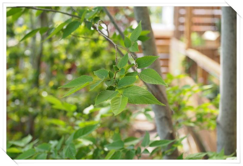 植物を楽しむために、あなたのお庭空間を一緒に作ります