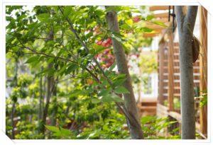 立見建設お庭レッスン