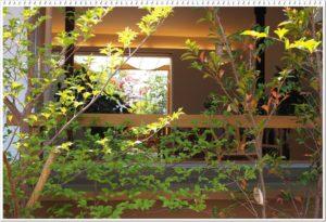 庭作りガーデニング教室講師堀久恵