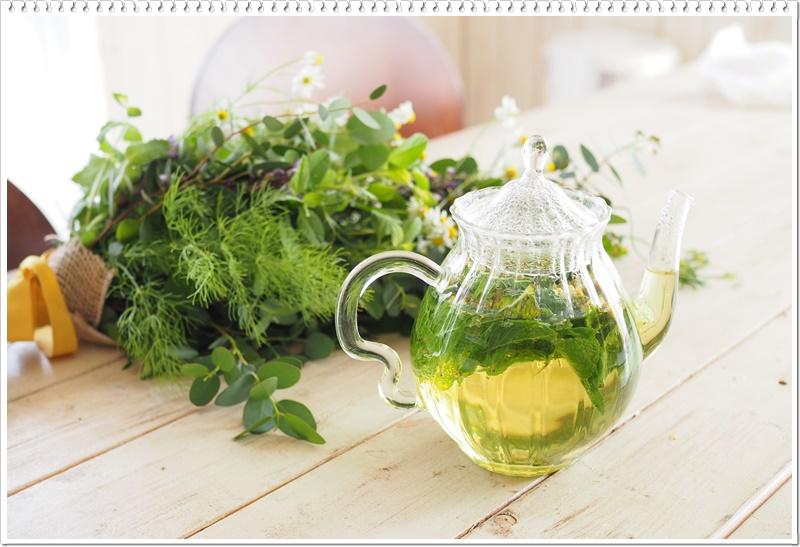 室内で緑を楽しむ!観葉植物を上手く育てるコツは?|ガーデニング教室