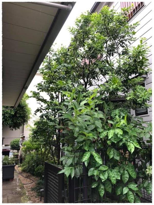 お庭作り庭メンテナンス剪定施工例熊谷