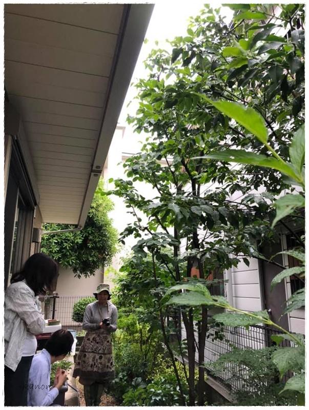 剪定お庭リフォーム施工例熊谷市