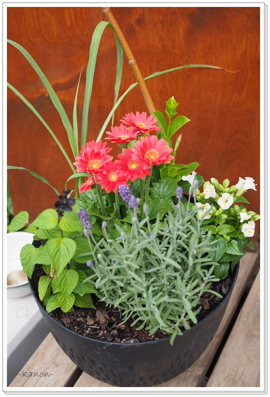 寄せ植えレンタル季節の植物店舗サロン向け埼玉群馬