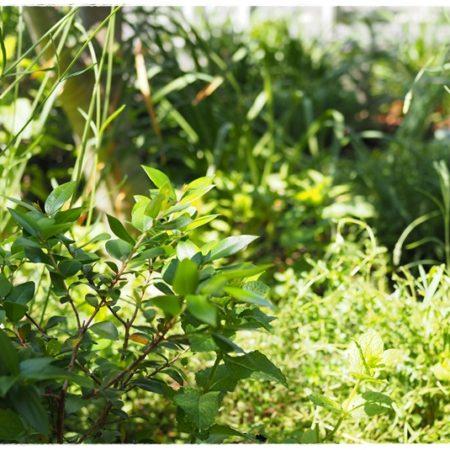 本格的ガーデニング教室埼玉県熊谷市ハーブの寄せ植え