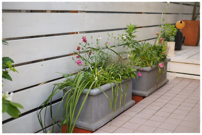 カフェレンタル式季節の寄せ植え配達さいたま市川口熊谷深谷