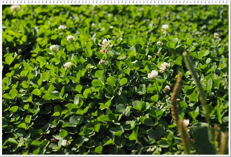 草は友達お庭相談会雑草対策熊谷市