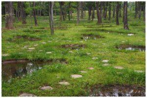 ガーデンセラピー森林療法