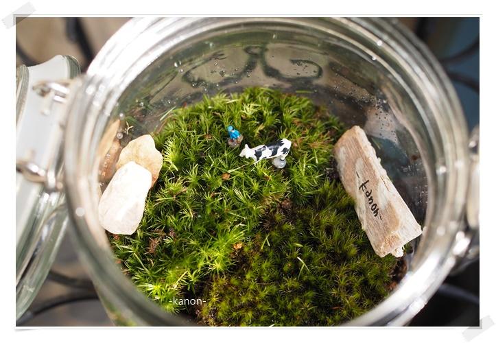 癒しのコケ庭テラリウムは、育て方も簡単|完成品販売