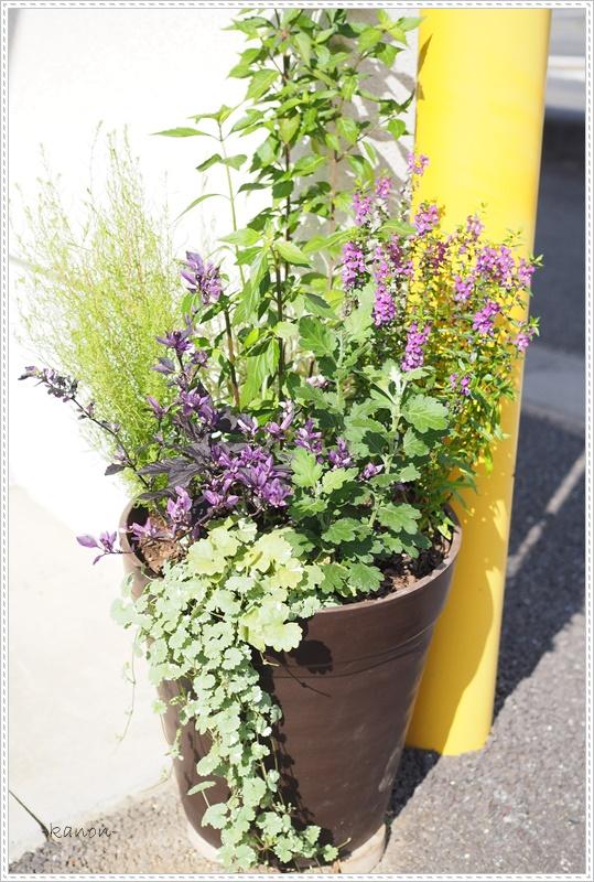 3カ月に1回新しい寄せ植えが定期的に届くサービス埼玉群馬