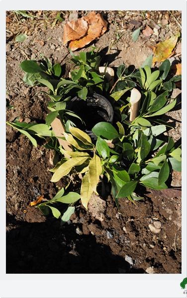 植物が育ちやすい土中環境からデザインするガーデン施工会社花音