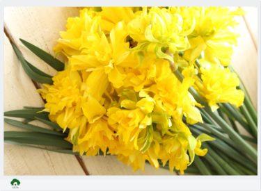 部屋にお花を飾りましょう♪