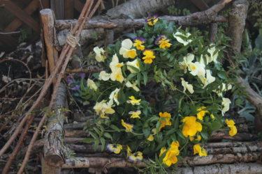 ガーデニングコース1月は1年草と多年草+ビオラのリース作り!【レッスンレポ】