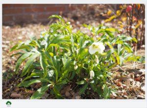 ガーデンセラピーを学ぶ教室花音