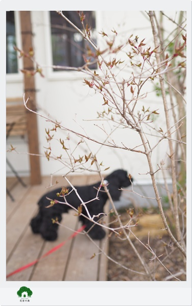 ガーデンセラピーが学べる教室花音