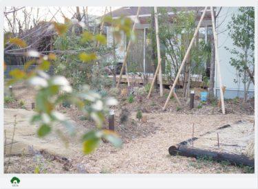 植物が育ちやすい土壌環境って?