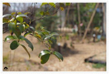 3月の入門クラスは、花音の森ヨガ+アロマセラピー体験