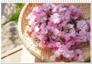 八重桜のある庭ナチュラルガーデン施工埼玉熊谷
