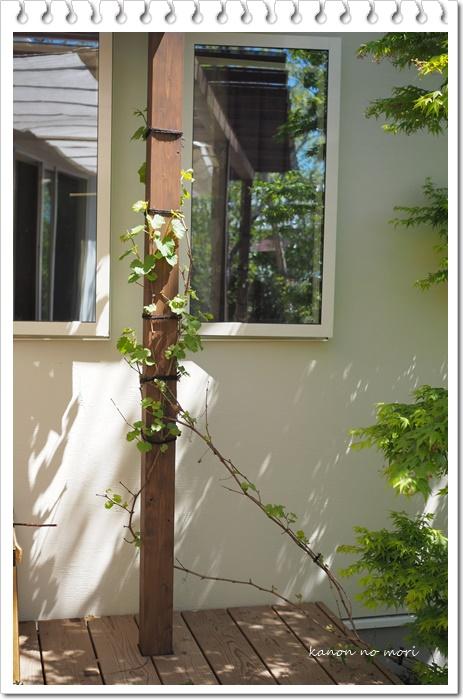 暑いぞ熊谷!クーラーなしで暮らす家と庭を作る