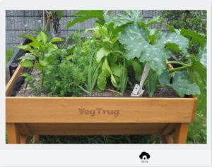 ベジトラグで野菜とハーブを育てる