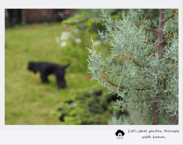 体験レッスン受付中♪9月の花音の森ヨガは「ミストシャワーヨガ」