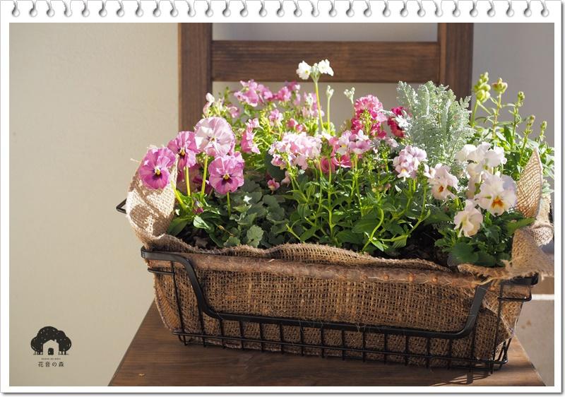 季節のお花の寄せ植え販売
