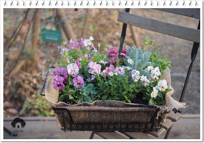 季節の草花寄せ植え販売