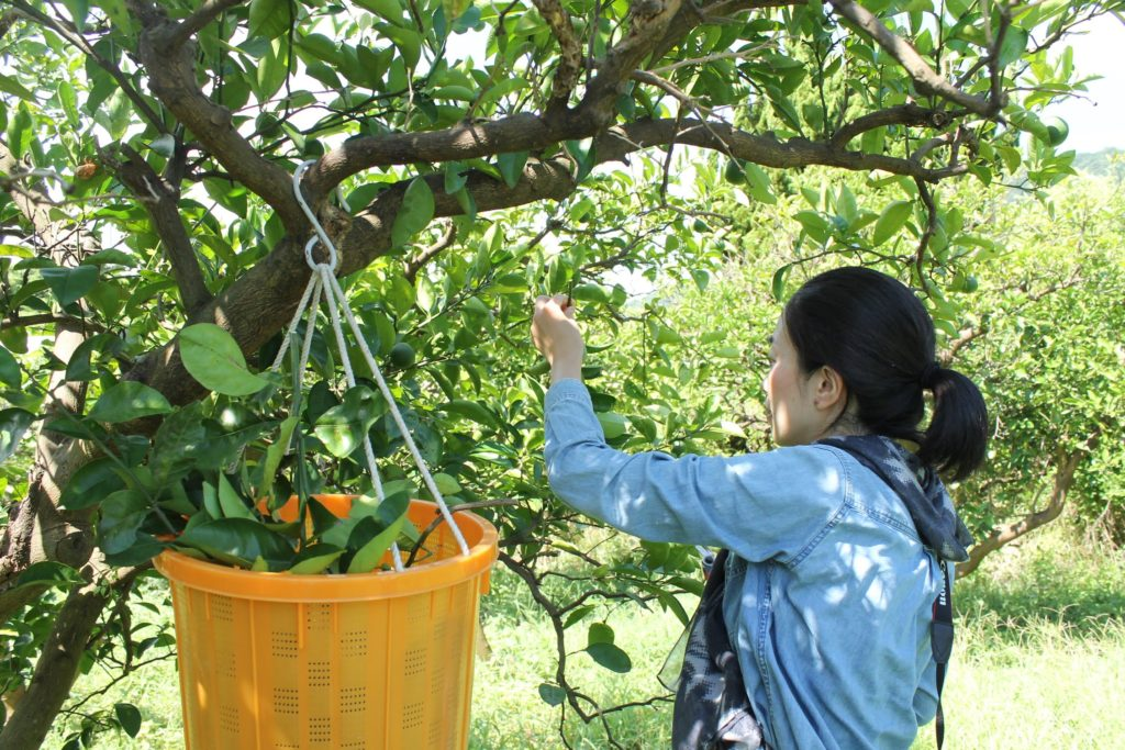 ガーデンセラピーを学ぶ教室